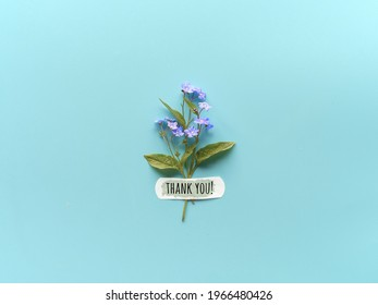 Thank you text. Forget-me-not wild flowers fixed with band aid to blue mint background. Simple greeting composition, natural light. WIld flowers attached with medical aid patch.