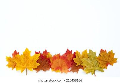 Thanksgiving Autumn Leaves Background on White