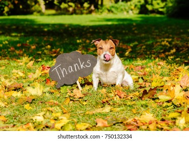 "Thanksgiving concept with dog on fall leaves and plate with ""thanks"" word on it"