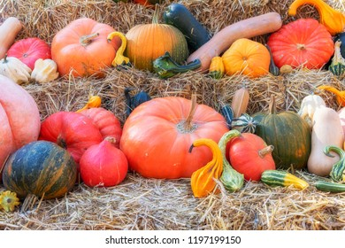 Thanksgiving day with pumpkins