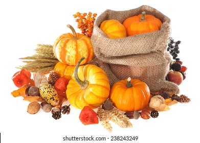 Thanksgiving - different pumpkins, apple, berries, nuts and grain in jute bag on white background