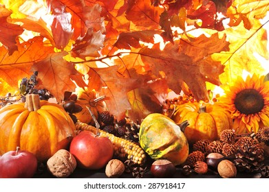 Thanksgiving - different pumpkins with nuts, maize, berries and grain in front of highlighted oak foliage