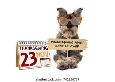 Thanksgiving Feast Dogs Allowed Sign Schnauzer wearing sunglasses November Calendar white background