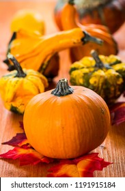 Thanksgiving and Halloween pumpkins still life