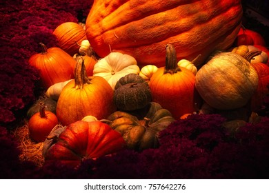 Thanksgiving Harvest of Squash and Pumpkins