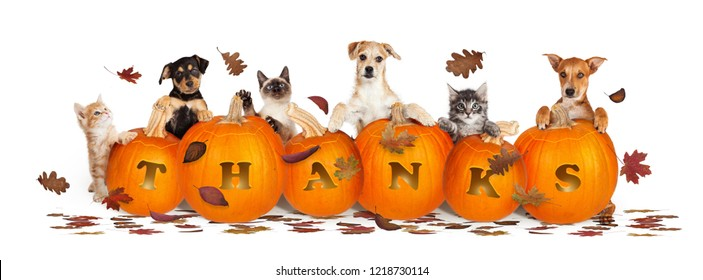 Thanksgiving pet web banner banner with leaves and pumpkins with word Thanks carved