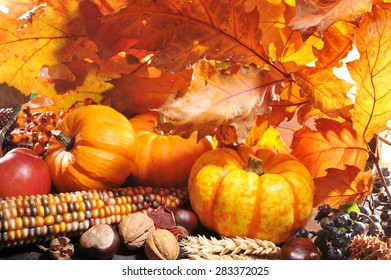 Thanksgiving - pumpkin, apples, nuts, maize and berries in front of highlighted oak foliage