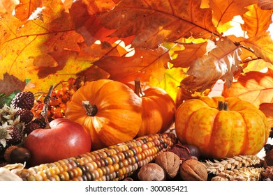 Thanksgiving - pumpkin, apples, nuts, maize and berries in front of highlighted maple foliage