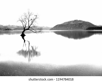 That Tree, Wanaka in Black and White