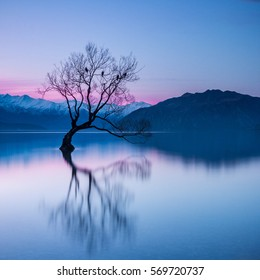 That Wanaka Tree after Sunset - The Lone Willow Tree in Lake Wanaka, the Most Photographed Tree in New Zealand | Wanaka, NEW ZEALAND