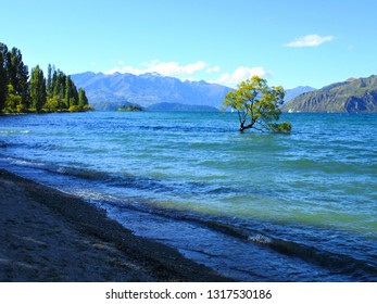 That Wanaka Tree, iconic willow tree growing surrounded by water of Wanaka lake, popular attraction for tourists visiting Wanaka city in Otago region, South Island of New Zealand