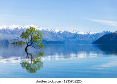 That Wanaka Tree in lake Wanaka, New Zealand