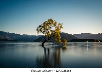 That Wanaka tree lit by the full moon