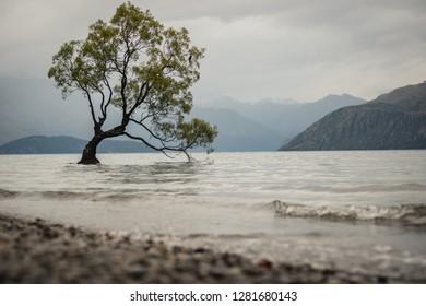 That wanaka tree, Wanaka, New Zealand