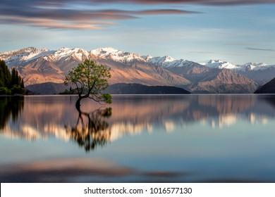 That Wanaka Tree in Wanaka, NZ.