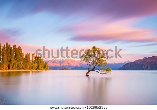 Это дерево Ванака на рассвете | Ванака, Новая Зеландия