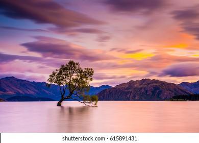 That Wanaka tree in sunset