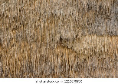 Thatch background texture
