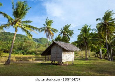Thatch farm hut in coconut grove on Camiguin Island rice field - Philippines