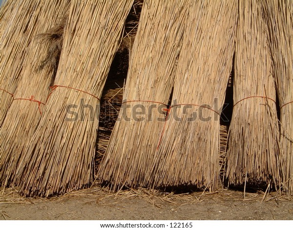 Thatch roof reeds stacked river marsh bundle broards Norfolk crop harvest cut