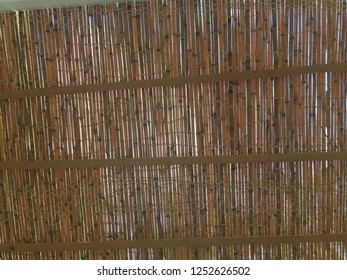 Thatch of Succah