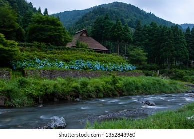 Thatched roof house and hydrangea clear stream