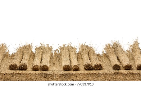 Thatched  roof of a house with reed , border of  straw. Isolated on a white background