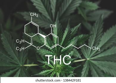 THC formula, Tetrahydrocannabinol . medical marijuana, cannabinoids and health, Hemp industry, CBD and THC elements in Cannabis,Growing Marijuana, despancery business.