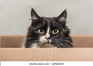 The cat looks out of a box.