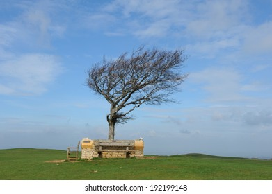 """""""The Single Beech"""" is the highest tree in the Cotswolds and is surrounded by a memorial wall. It is situated on Cleeve Common and is a biological and geological site of special scientific interest."""