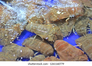 Thenus orientalis: Flathead lobster, Lobster Moreton Bay bug, Oriental flathead lobster. Which is sold in the market for fresh seafood. In Ang Sila Town Chonburi province