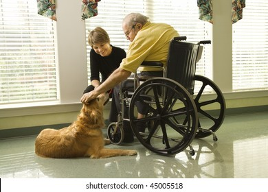 Therapy dog is pet by an elderly man in a wheelchair and a younger woman. Horizontal shot.