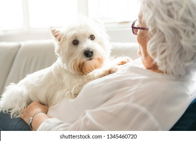 The Therapy pet on couch next to elderly person in retirement rest home for seniors