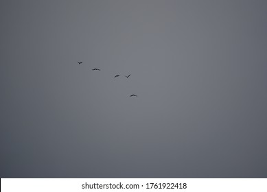 there are 5 birds , who flew away
