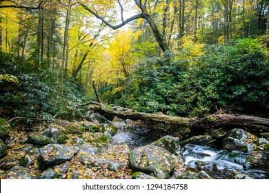 There is a beautiful display of Autumn yellow in this image taken in Ramsey Cascades in Great Smoky Mountains NP near Gatlinburg, TN. A large tree trunk has fallen across the water on to the rocks.