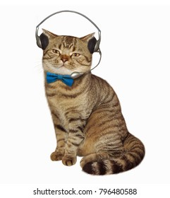 There is a cat in headphones with a microphone. White background.