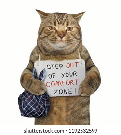 """There is a cat with a sign around his neck. It says """" Step out of your comfort zone ! """"."""