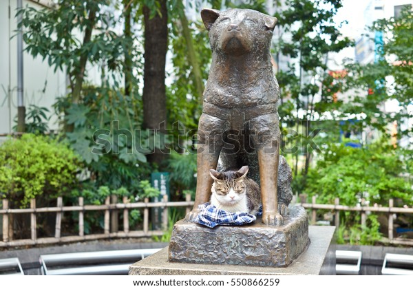There is cat sit at Hachiko dog statue at Shibuya station. It is a meeting point and landmark of shibuya.
