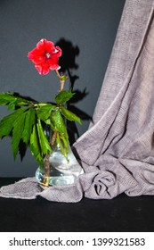 There is a dry branch and green leaves in a transparent vase, and a red flower on a branch. All this on a black background, in the background hangs the fabric. Still life.