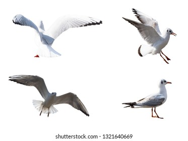 There are four flying seagulls, attacking seagulls, and looking seagulls.