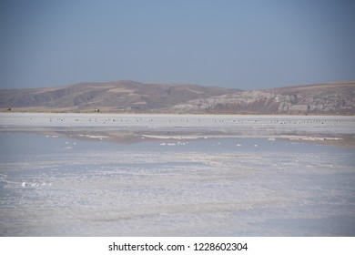 There are many different types of birds in the Salt Lake(In Turkish:Tuz Golu) /TURKEY