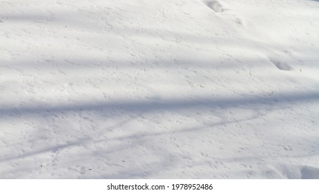 There are many tracks of small birds in the snow in winter. Wild birds run through the snow in search of food in the cold.