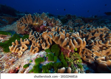 There are many wonders to be seen under the ocean, like the coral reefs of National Marine Sanctuary of American Samoa seen here. About 500 million people around the world depend on reefs.