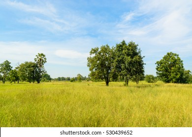 There are not many trees. Among the rice fields