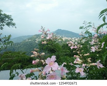 There peace in nature. The surreal beauty of kalimpong with its mountains and flora.