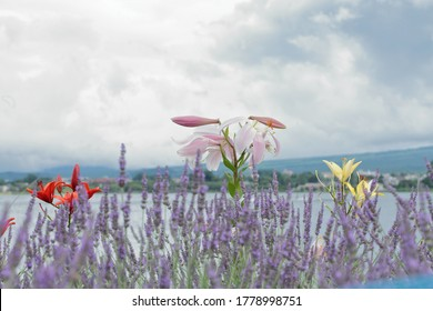 There was the scent of lavender borne on the breeze
