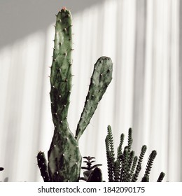 There are shadown on the wall reflecting from the curtain. There is cactus in front of the white wall.