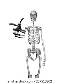 There is a Skeleton pointing directly at you. Isolated on white