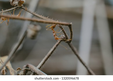 There are two ants climbing the death branch of tree.