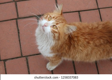 there is a yellow cat who talks with human.Stroke a cat